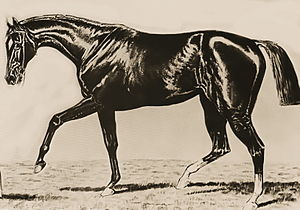 Spendthrift (horse) - Image: Spendthrift (USA)
