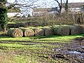 Sprouting Bales - geograph.org.uk - 289446.jpg