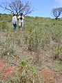 Starr-030429-0045-Myoporum sandwicense-habit with Kim and Paul-Lua Makikia-Kahoolawe (24003405104).jpg