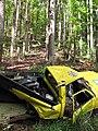 Starr-090714-2833-Swietenia macrophylla-habit and smashed car-Honokahau Valley-Maui (24672725790).jpg