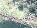 Starr-091112-9580-Syzygium cumini-aerial view motorbike tracks-Waihee West Maui-Maui (24362817793).jpg