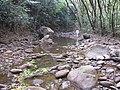 Starr-130311-2094-Syzygium cumini-habitat after flood with Kim-Maliko Gulch-Maui (24911051420).jpg