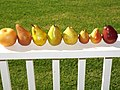 Starr-140114-3129-Pyrus communis-many varieties of fruit from Foodland-Hawea Pl Olinda-Maui (25238714295).jpg