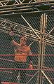 Steel Cage.jpg