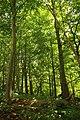 Steenbergse bossen 18.jpg