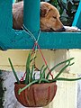 Still Life with Dog - Zipolite - Oaxaca - Mexico (15399496909).jpg