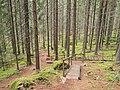 Strais on Touruvuori nature trail 2.jpg