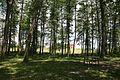 Stryzhavka, Vinnyts'ka oblast, Ukraine - panoramio (2).jpg