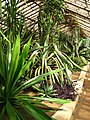 Succulents greenhouse 03.JPG