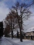 Suchdol - stromořadí lip srdčitých v Gagarinově ulici na Budovci (11).jpg