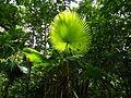 Sulawesi trsr ph11.jpg