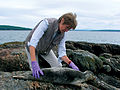 Susan Shaw with Seal Pup 2007.jpg