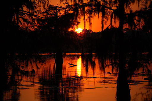 Swamp Sunset in Cajun Country