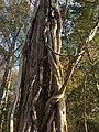 Symbolic Thanksgiving Family Tree (32335607482).jpg