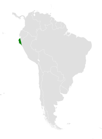 Tachycineta stolzmanni distribution map