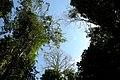 Taman Negara, Malaysia, Tree Canopy.jpg