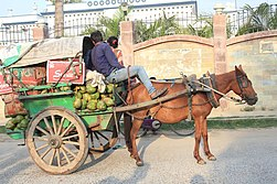 Tired-looking bay horse hitched to a rustic cart