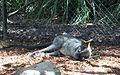 Taronga Zoo, Sydney (3365826953).jpg