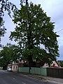 Tartu (35253872525).jpg