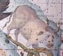 Taurus Poniatovii