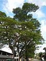 Taysan,Batangasjf9820 15.JPG