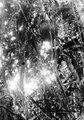 Termitbo i träd i urskog. Sydamerika. Bolivia - SMVK - 002416.tif