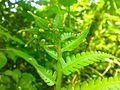 Testuras da vegetação no Núcleo Picinguaba.jpg