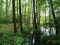 Teufelsbruch swamp next to crossing path in summer 4.jpg