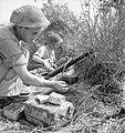 The British Army in Italy 1944 NA17472.jpg
