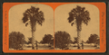 The Palmetto, Palatka, from Robert N. Dennis collection of stereoscopic views.png