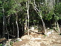 The Pit - Profundo - Cenote (4317117458).jpg