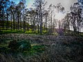 The Woods (34245006).jpeg