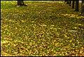 Those falling Autumn Leaves-1 (34194873442).jpg