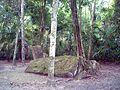 Tikal Group R stelae.jpg