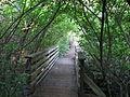 Tilden botanical garden 8.JPG