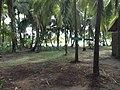 Tortuguero, Limón Province, Costa Rica - panoramio (2).jpg