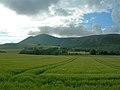 Towards Eastfield - geograph.org.uk - 489527.jpg