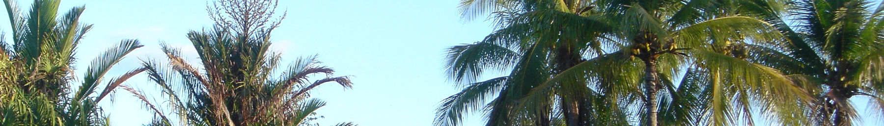 Townsville (Queensland) banner Palms.jpg