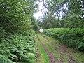Track, Little Ridge Wood near Fonthill House 5 - geograph.org.uk - 913353.jpg