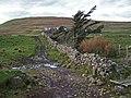 Track, wall and trees at Ramasaig - geograph.org.uk - 1550947.jpg