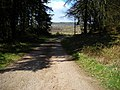 Track in Dalbeattie Forest - geograph.org.uk - 392865.jpg