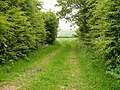 Track near Bunny Wood - geograph.org.uk - 1335551.jpg