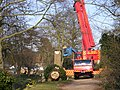 Tree Surgery in The Causeway, Peasenhall - geograph.org.uk - 1213380.jpg