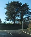 Trees mark the road junction - geograph.org.uk - 1072375.jpg
