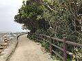 Trees on Aoshima Island 3.jpg
