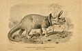 Triceratops Prorsus.jpg