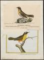 Trichas marilandica - 1700-1880 - Print - Iconographia Zoologica - Special Collections University of Amsterdam - UBA01 IZ16300063.tif