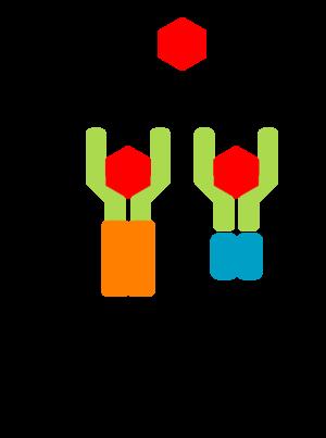 Tropomyosin receptor kinase B - TrkB signaling