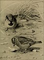 True bird stories from my note-books (1903) (14563883387).jpg