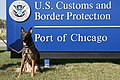 "U.S. Customs and Border Protection Canine ""Shadow"" Detected Opium in Chicago Parcels (8594995431).jpg"